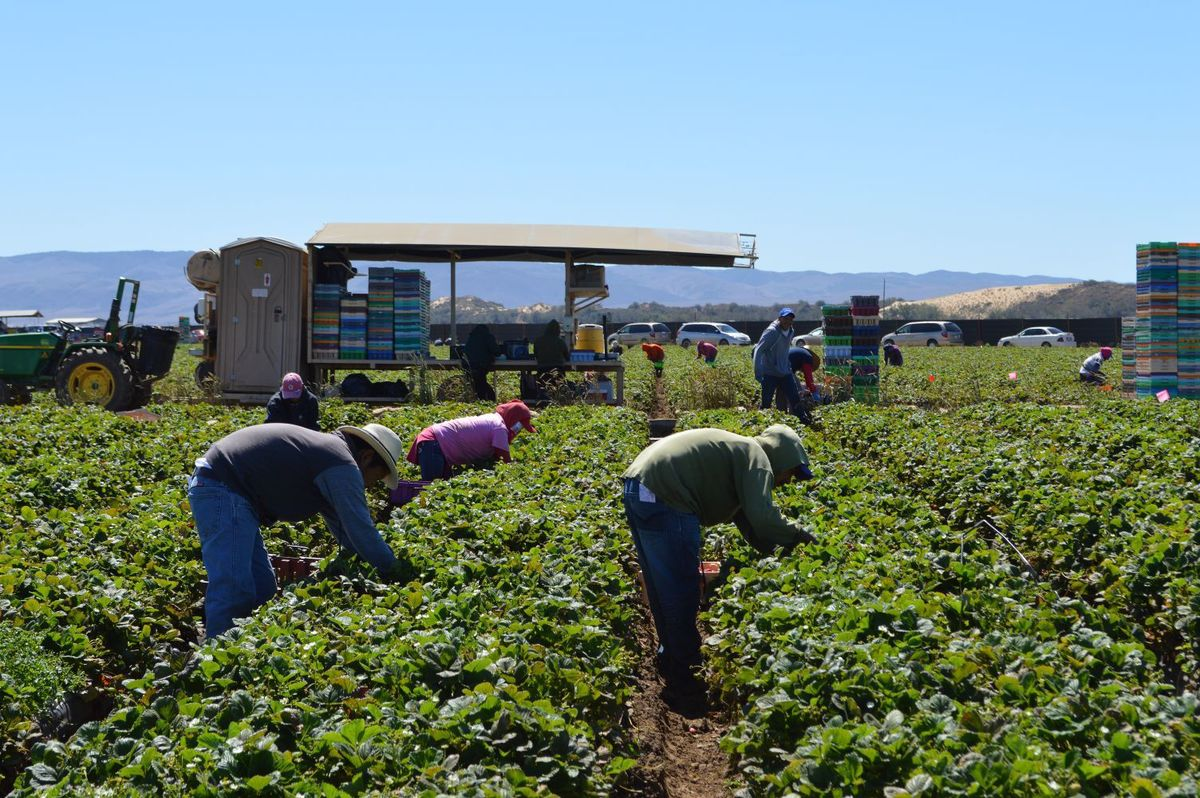 Heated debate over which court should hear farmworkers' case